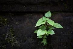 Die Funktion von wild wachsenden Pflanzen Lizenzfreies Stockfoto