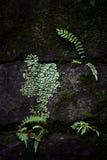Die Funktion von wild wachsenden Pflanzen Stockfoto