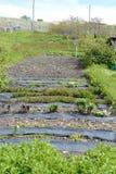 Die Gärten am Landsitz Harberton Lizenzfreies Stockfoto