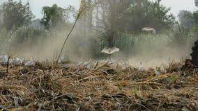 Die Gärtner benutzen Pflugtraktor stock footage