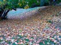 Die Garten-Wiese Stockfoto