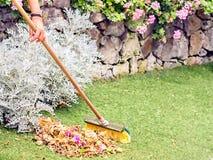 Die Gartenarbeit, viele Bl?tter und Blumen liegen in der Wiese stockfotos