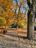 Die Gasse im Schatten der Herbstbäume Stockbild