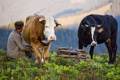 Die Gebirgslandschaft von Rumänien mit typischer Bauernhoftätigkeit Lizenzfreies Stockfoto