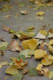 Die gefallenen Blätter Stockbild