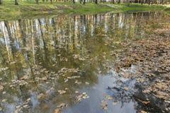 Die gefallenen Blätter der Bäume, Eichen sind in der Wasserquelle von Stockbild