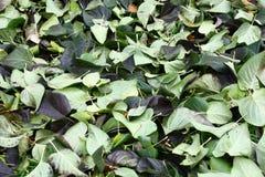 Die gefallenen unten Blätter einer Flieder lizenzfreies stockfoto