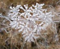 Die gefrorene Anlage, die im Schnee bedeckt werden und das Eis im Herzen formt Lizenzfreie Stockbilder