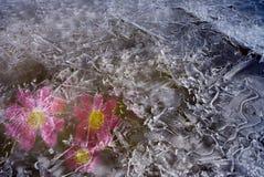 Die gefrorenen purpurroten Blumen Lizenzfreie Stockfotografie
