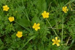 Die gelbe Blume stockbilder
