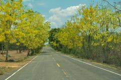 Die gelbe Blume entlang der Straße lizenzfreies stockbild