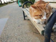 Die gelbe Katze am Fußweg stockfoto