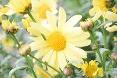 Die gelbe schöne Blume Stockbilder