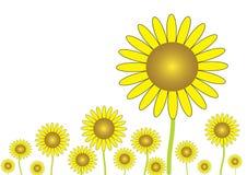 Die gelbe Sonnenblume Lizenzfreie Stockfotografie