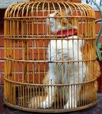 Die gelbe und weiße Katze in einem Käfig wünscht für Freiheit Stockfoto