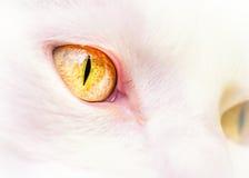 Die gelben Augen der weißen Katze Stockfoto