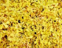 Die Gelborchideenblumen, die Hintergrund vereinbaren Lizenzfreie Stockfotos