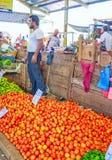 Die geschmackvollen Tomaten Lizenzfreie Stockfotografie