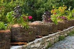 Die gesunden genießbaren Kräuter, die im Korb eingemacht sind, arbeiten Äußeres im Garten Lizenzfreie Stockfotos