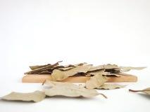 Die Gewürze - Thymian, Kreuzkümmel und Knoblauch lizenzfreies stockbild
