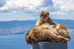Die Gibraltar-Affen Lizenzfreie Stockfotografie