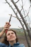 Die glückliche Gärtnerfrau, die Beschneidung verwendet, scissors im Obstgartengarten. Hübsches Arbeitnehmerinporträt Lizenzfreies Stockfoto