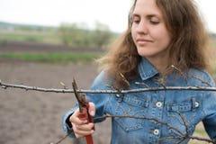 Die glückliche Gärtnerfrau, die Beschneidung verwendet, scissors im Obstgartengarten. Hübsches Arbeitnehmerinporträt Lizenzfreies Stockbild