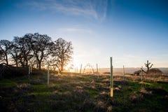 Die goldene Stunde, stellt die Sonne auf die Landschaft nahe Stanford ein lizenzfreie stockfotografie