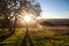 Die goldene Stunde, stellt die Sonne auf die Landschaft nahe Stanford ein stockbild