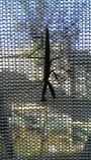 Die Gottesanbeterin auf dem Fenster Lizenzfreie Stockfotos