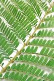 Die Grünblätter Lizenzfreies Stockbild