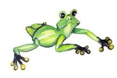 Die grüne Amphibie stock abbildung