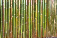 Die grüne Bambuswand morgens Lizenzfreie Stockfotografie