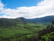 Die grüne Bromo-Savanne Lizenzfreie Stockbilder