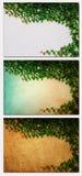 Die grüne Kriechpflanze-Anlage auf altem Papier Lizenzfreie Stockfotografie