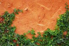 Die grüne Kriechpflanze-Anlage auf roter Wand Lizenzfreies Stockbild