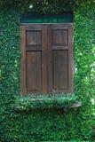 Die grüne Kriechpflanze-Anlage auf Wand und Fenster Lizenzfreie Stockbilder