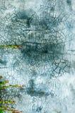 Die grüne Kriechpflanze auf Wand Lizenzfreies Stockbild