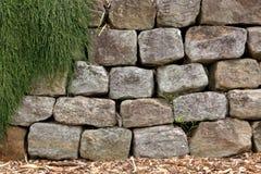 Die grüne Kriechpflanzen-Anlage auf einem Felsen Lizenzfreie Stockfotografie