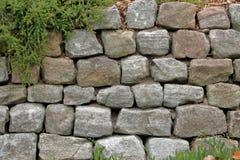 Die grüne Kriechpflanzen-Anlage auf einer Felsen Wand schafft ein schönes Backg Lizenzfreie Stockbilder