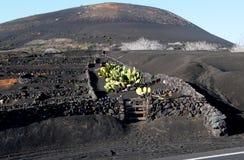 Die grüne Plantage auf dem schwarzen vulkanischen Land Stockbild