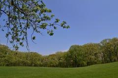 Die grüne Wiese als das Hintergrundbild Stockbilder