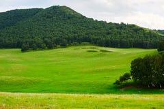 Die grüne Wiese und der Wald Stockfotos