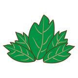 Die grünen Einzelteile des Blattes fünf stock abbildung