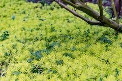 Die Grünpflanzen stockbild