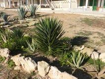 Die Grünpflanzen Stockfotografie