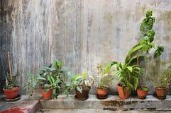 Die Grünpflanzen in braune Töpfe herein auf Weinlesewand Lizenzfreie Stockbilder