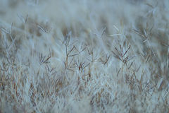 Die grass pattern on nature Stock Images
