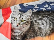 Die graue gestreifte Katze steht patriotisch auf der Stern-gestreiften amerikanischen Flagge still lizenzfreie stockfotos