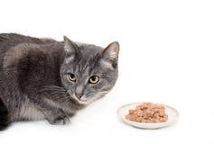 Die graue Katze isst die in Büchsen konservierte Nahrung der Katze Stockbild